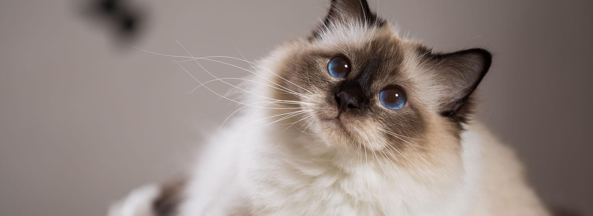chat01-veterinaire-ransart-charleroi