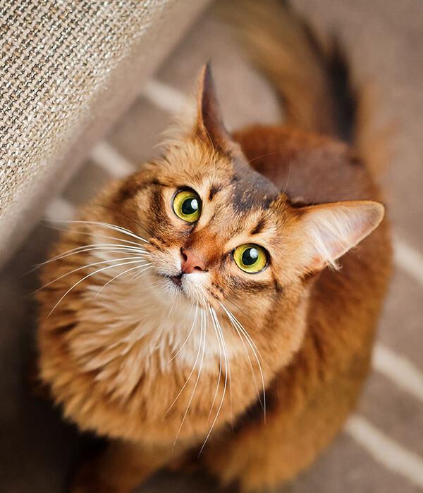 chats01-veterinaire-ransart-charleroi