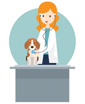 dr-veterinaire-ransart-charleroi