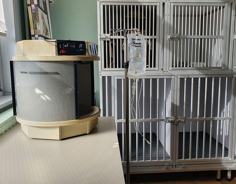 hospitalisation1-veterinaire-ransart-charleroi